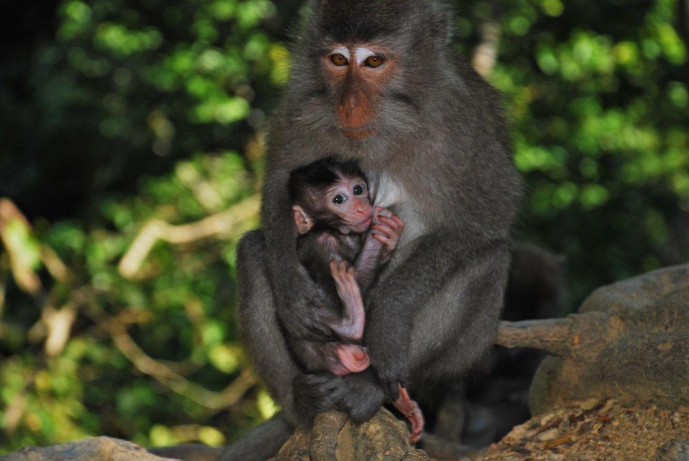Monkey-forest-Lombok-qué-ver