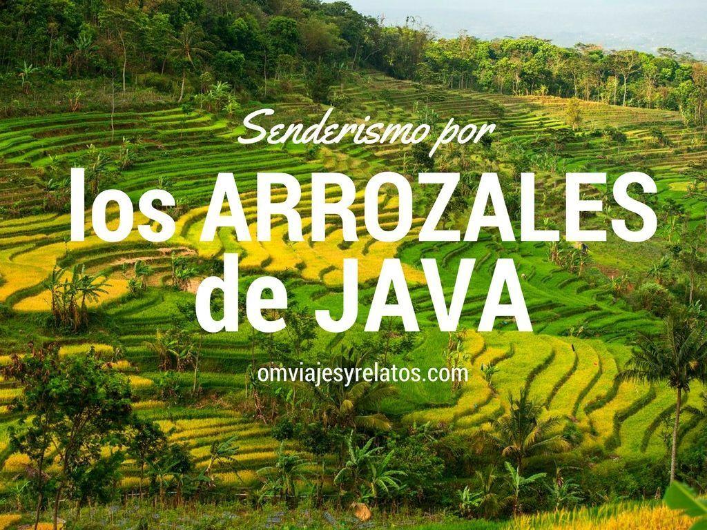 senderismo-por-los-arrozales-de-Java