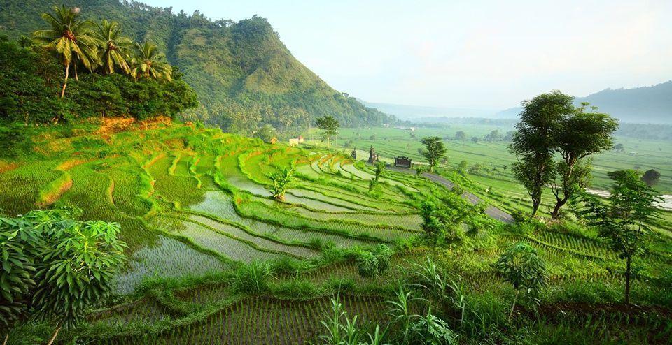 Selogriyo-campos-de-arroz-Java