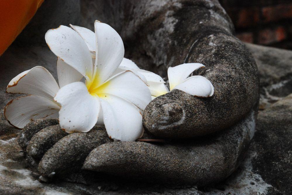 mano-Buda
