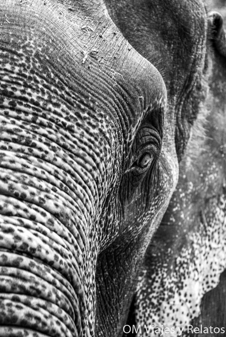 elefantes-en-Chiang-Mai