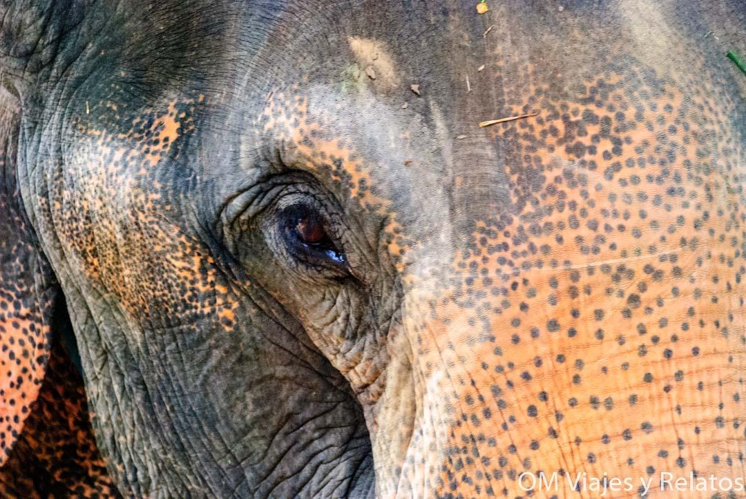 donde-ver-elefantes-en-Tailandia