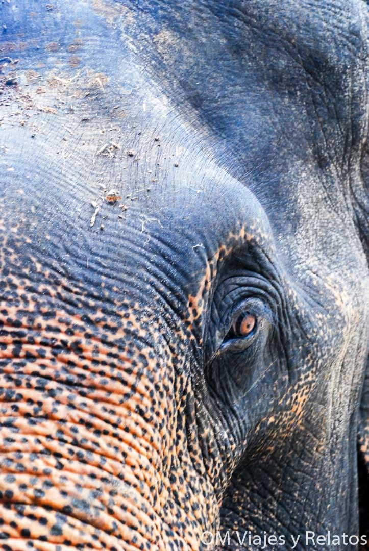 Santuario-elefantes-Tailandia
