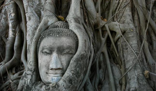 la-cabeza-de-Buda-en-el-árbol