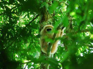 selvas-Tailandia