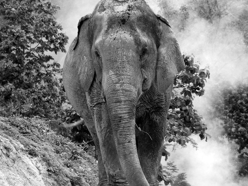 LOS ELEFANTES EN TAILANDIA: TAILANDIA CON NIÑOS