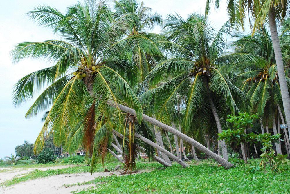 cocos-Koh-Samui