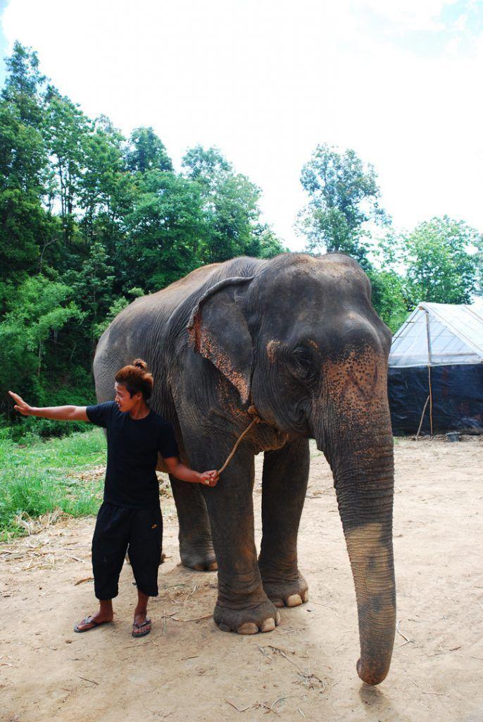 viajar-a-Tailandia-con-niños-campamento-elefantes