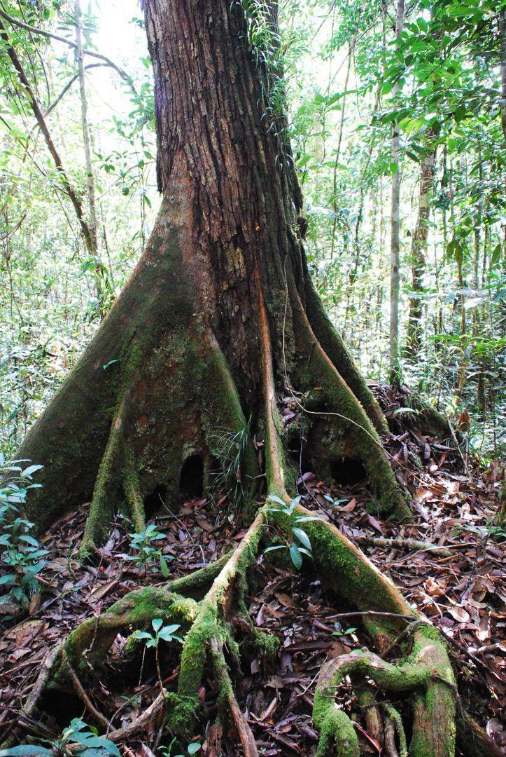 tour-orangutanes-Borneo