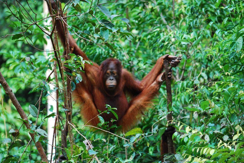 Borneo-tour
