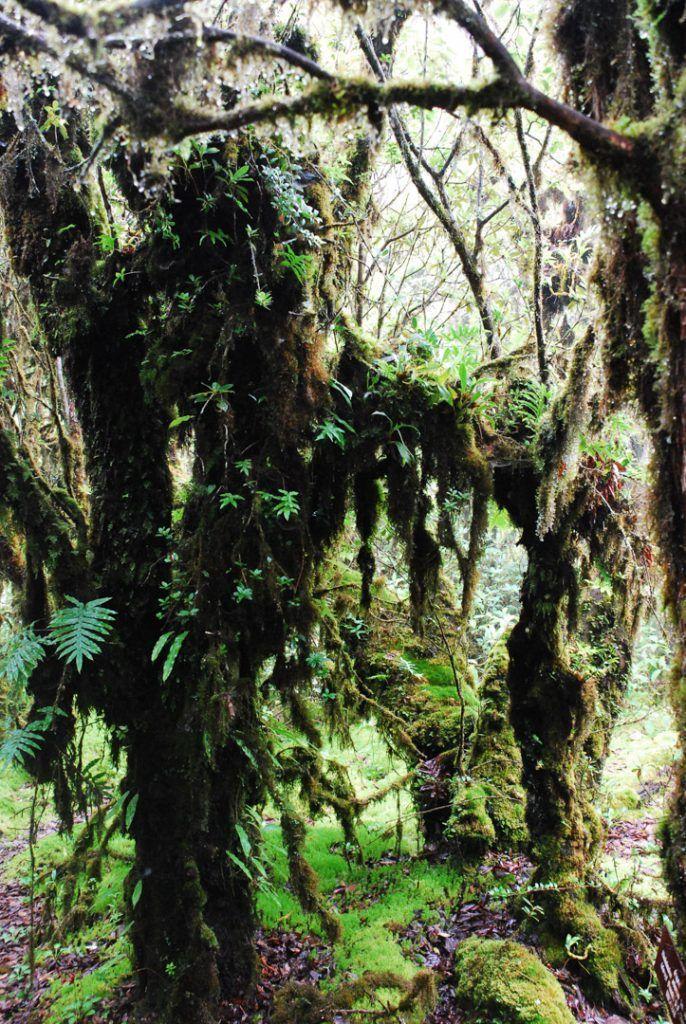 trekking-Chiang-Mai-bosques-selvas