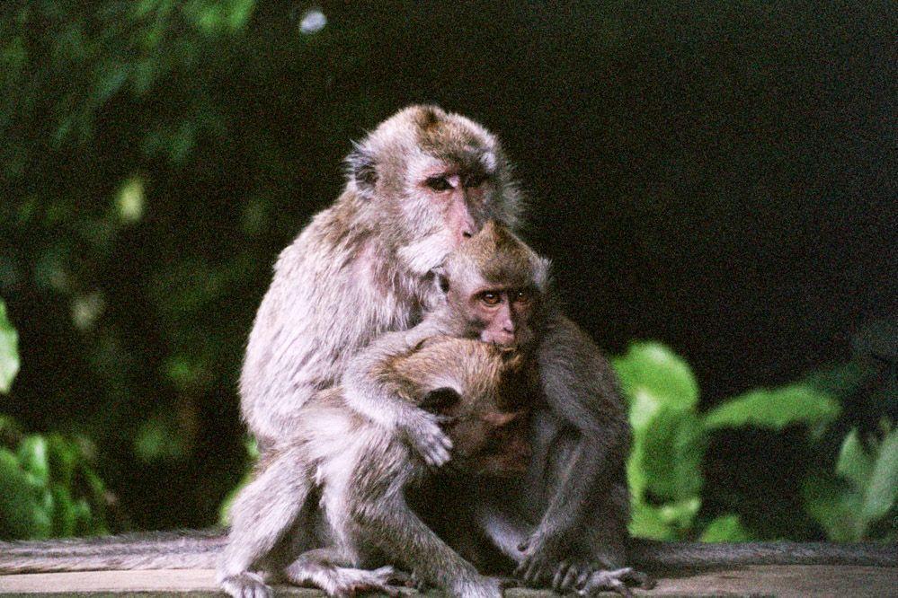 Bali-templo-de-los-monos