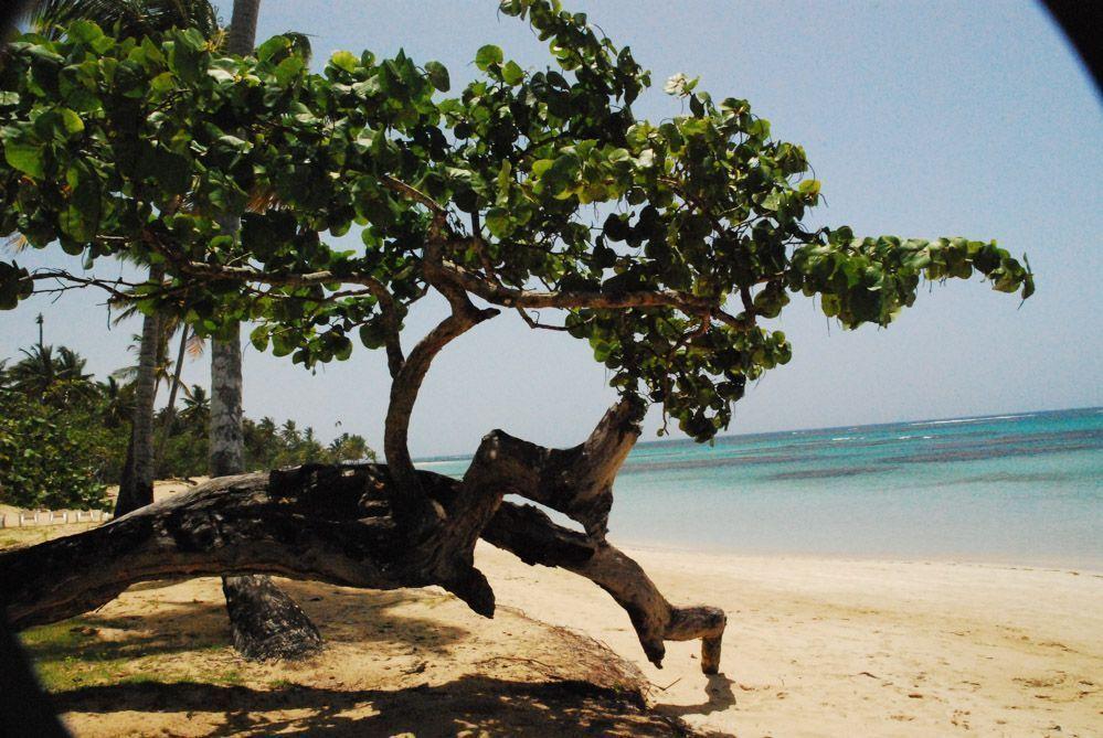 qué-ver-y-hacer-en-samana-república-dominicana