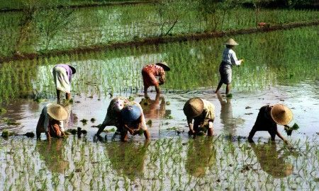 Lombok-arrozales-rutas