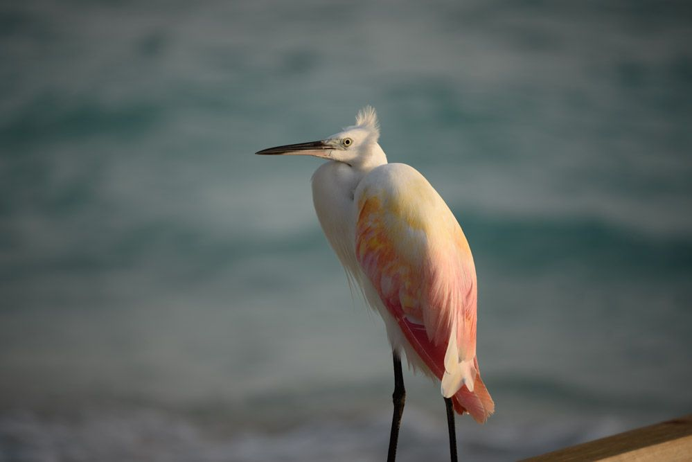 Paisajes-de-Maldivas