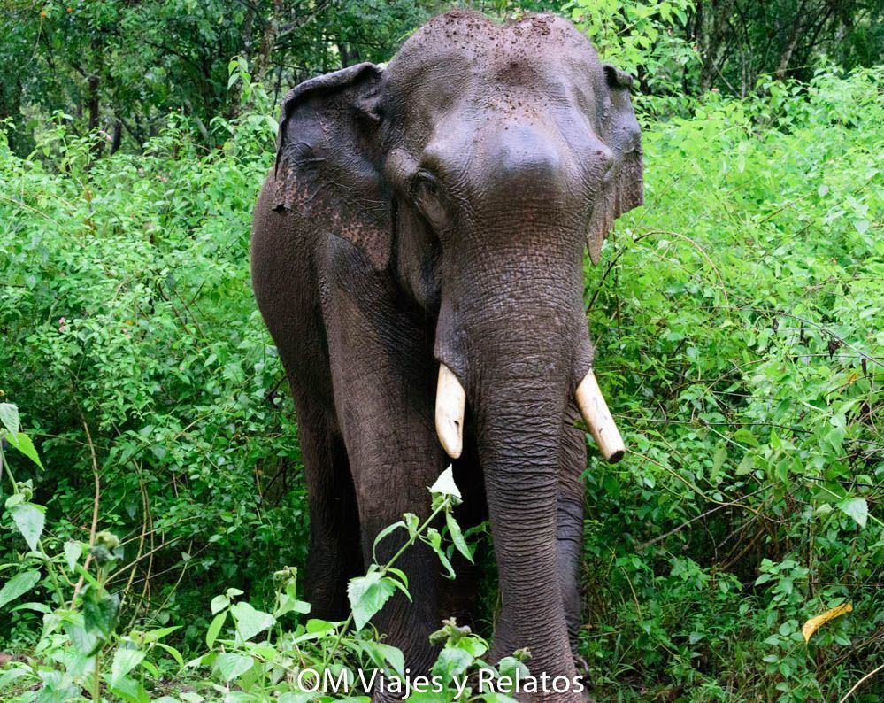 El-libro-de-la-selva-paisajes-India