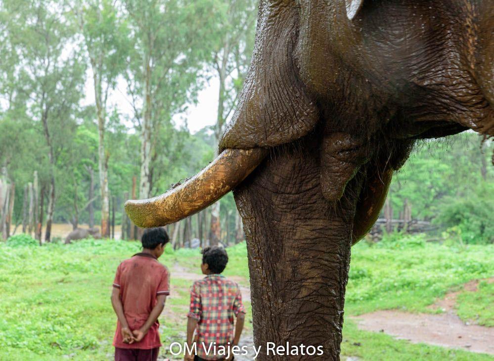 elefantes-India-safari