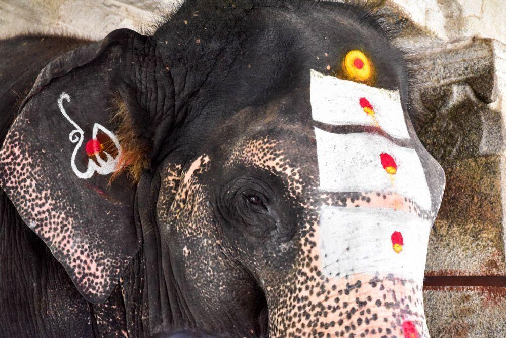 India-elefantes