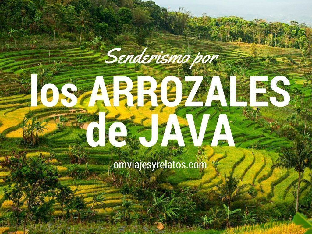 Viaje-a-Indonesia-arrozales-Senderismo
