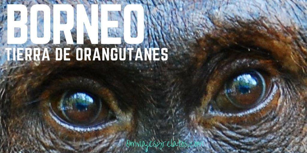 viaje-a-Indonesia-Borneo-Orangutanes