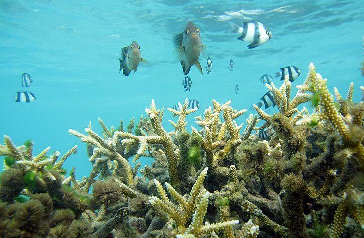viajar-barato-a-Maldivas