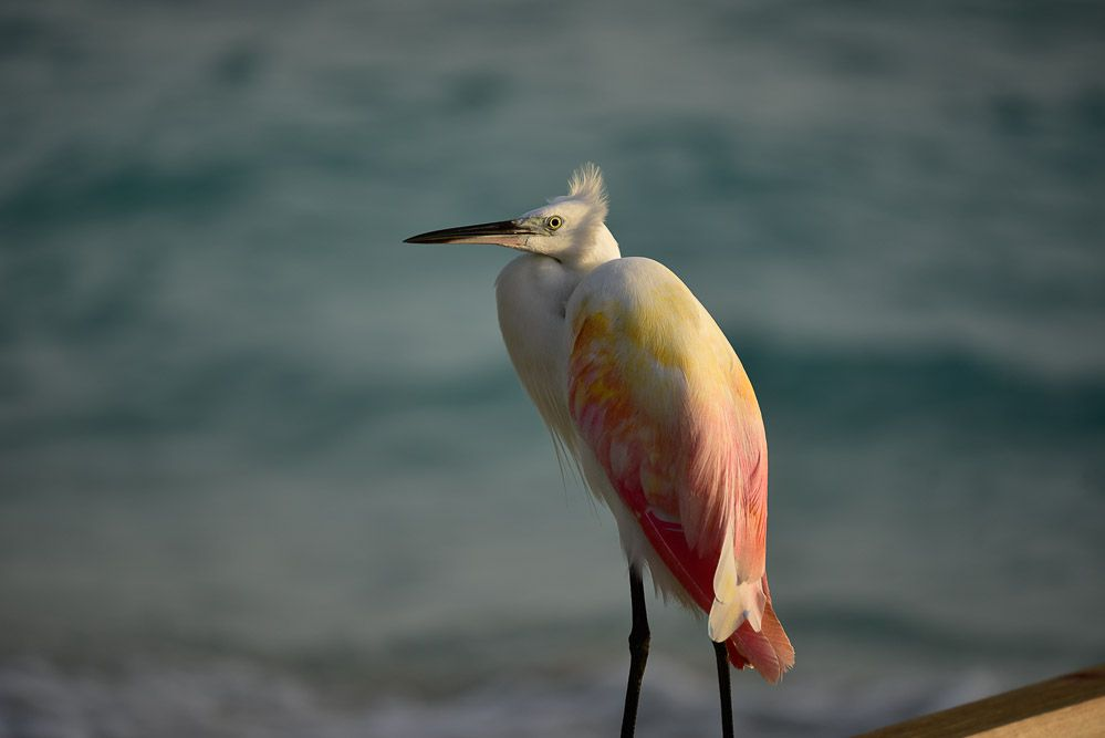 maldivas-blog-viaje