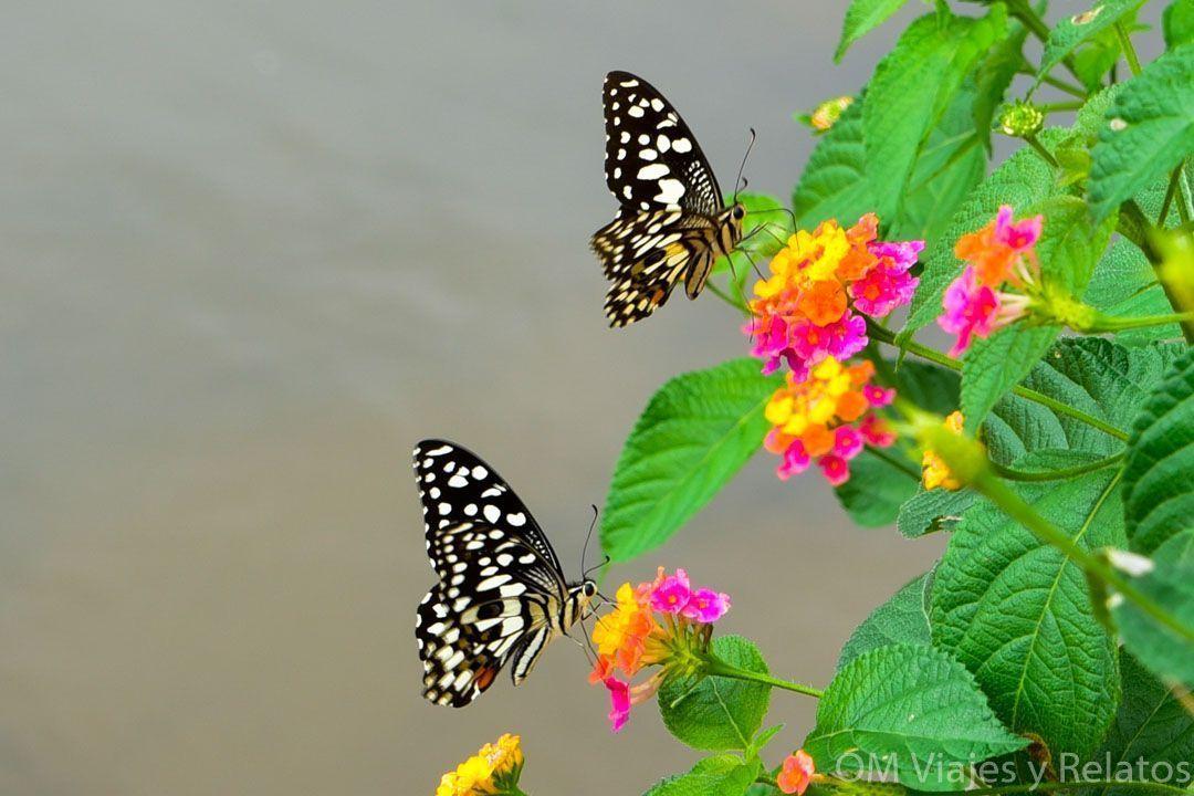 viaje-India-sur-qué-ver-naturaleza