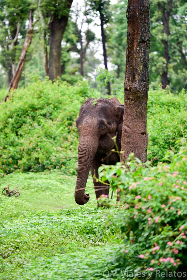 parques-nacionales-del-sur-de-India