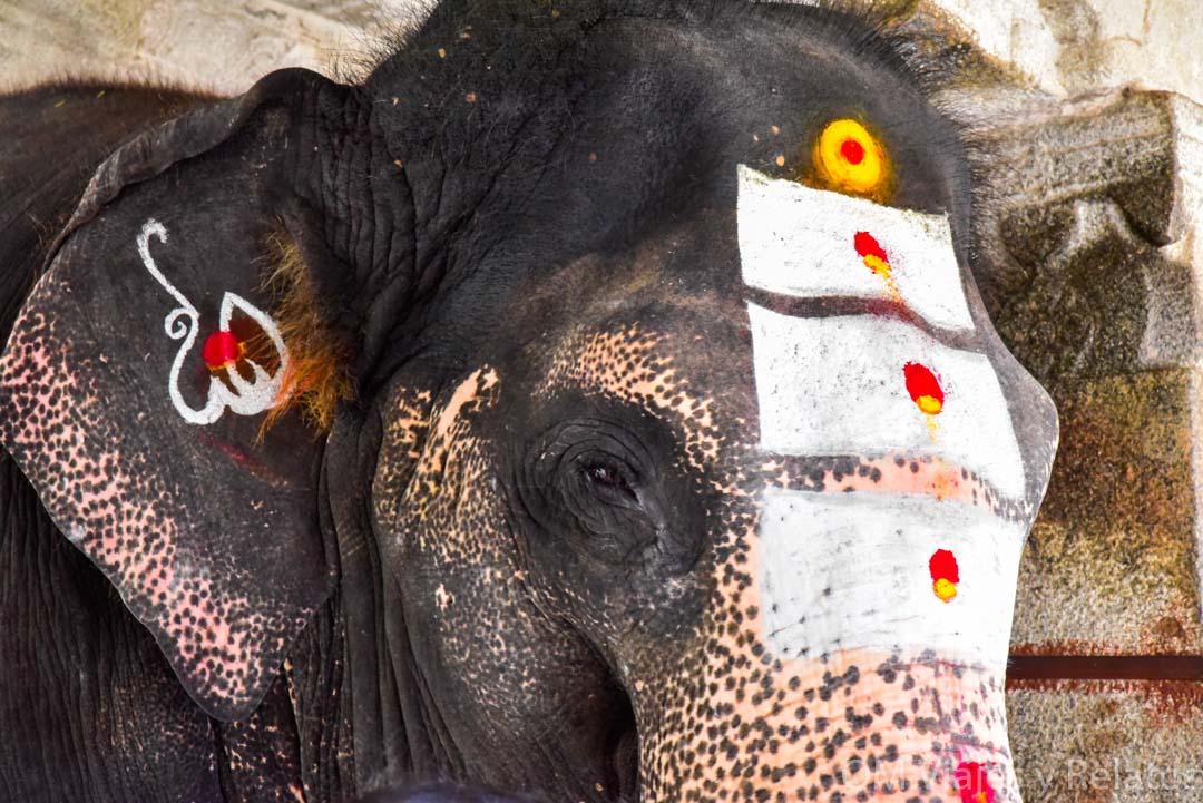 Hampi-elefanta-sagrada