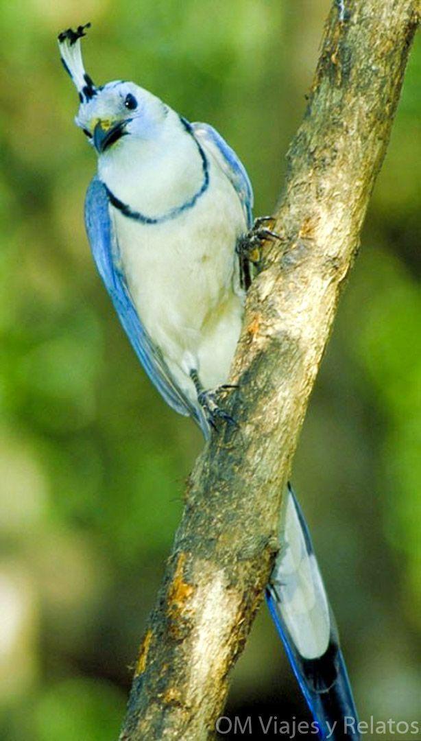 Tortuguero-por-libre-flora-y-fauna-de-Costa-Rica