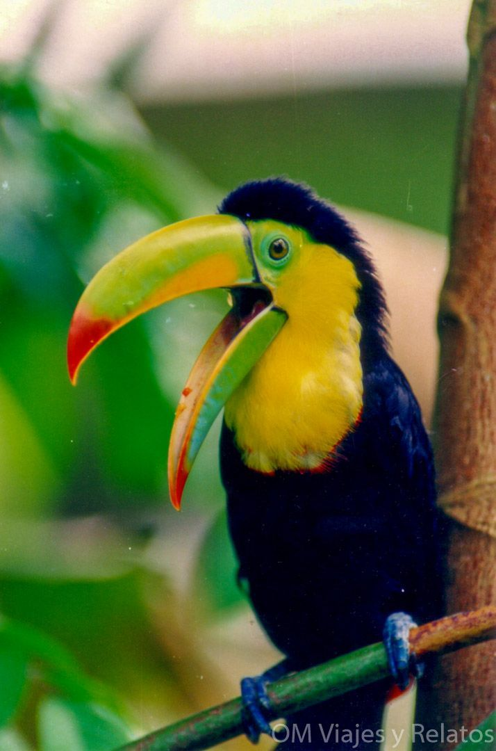 Tortuguero-por-libre-Tucanes-viaje-Costa-Rica