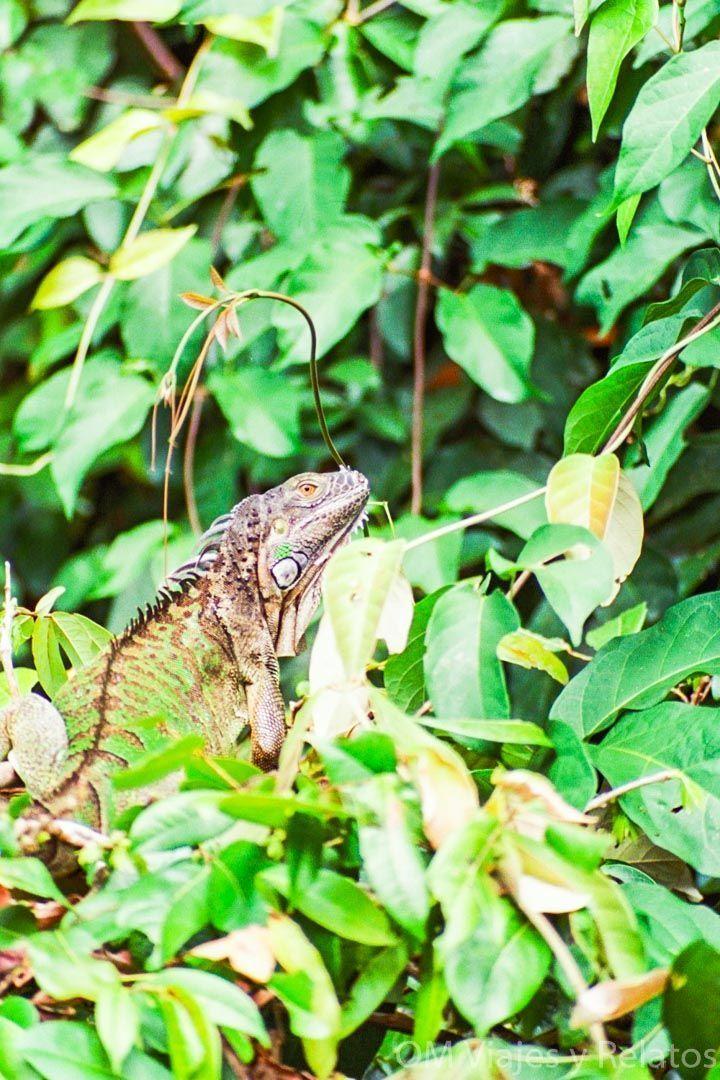 tortuguero-rutas-senderismo-trekkings-Costa-Rica