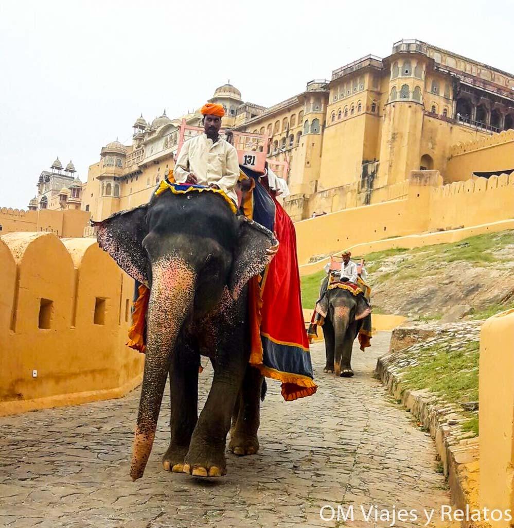 Fuerte-Amber-India