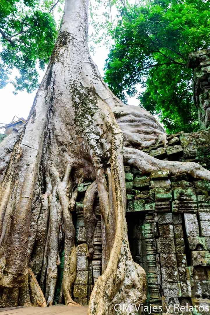 selvas-Angkor-Camboya