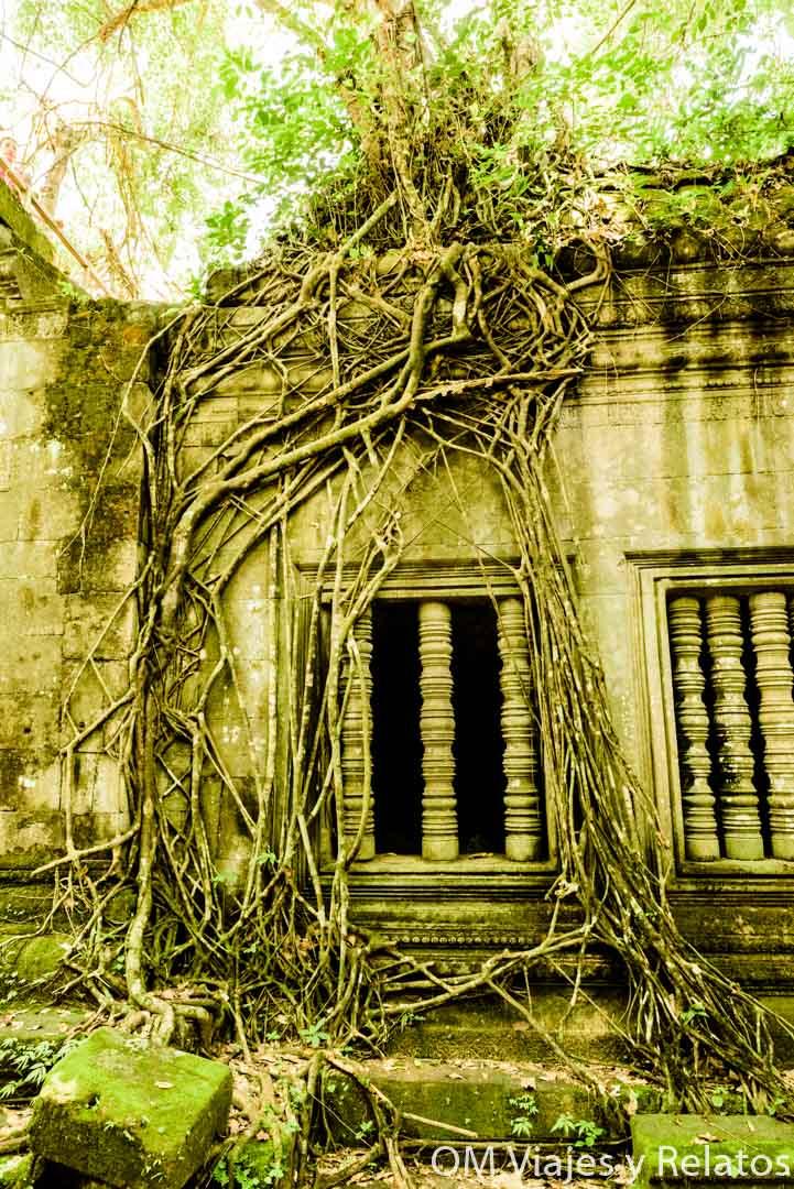Las selvas devoran los templos de Camboya
