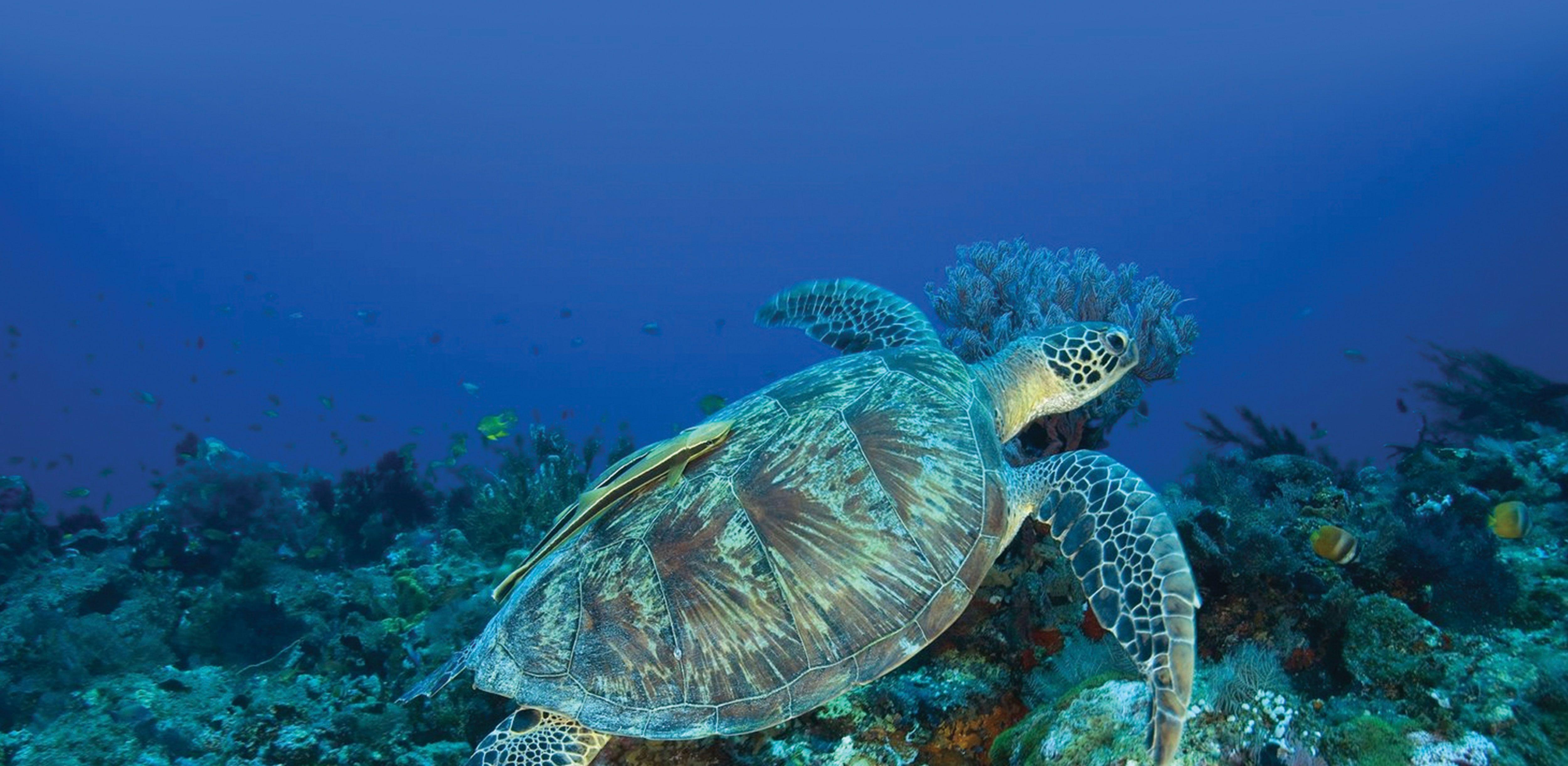 Las-Islas-Gili-en-Indonesia-buceo-snorkel