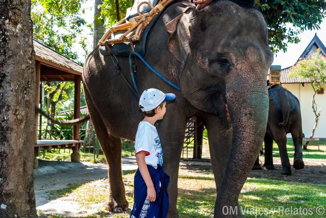 elefantes-Borobudur