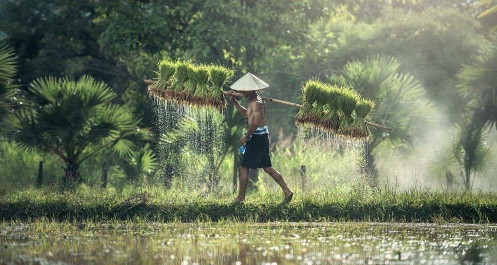 campos-de-arroz-Bali-que-ver