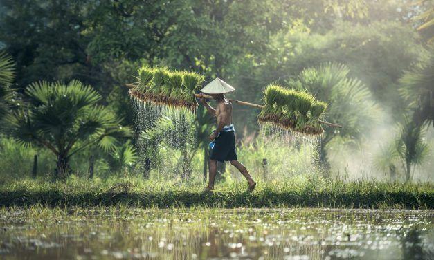 QUE VER Y HACER EN BALI (INDONESIA): 12 LUGARES IMPRESCINDIBLES EN BALI Y ALREDEDORES