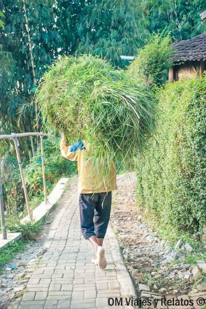 arrozales-de-Java