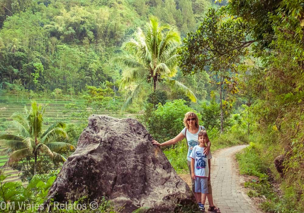 arrozales-de-Indonesia-Java