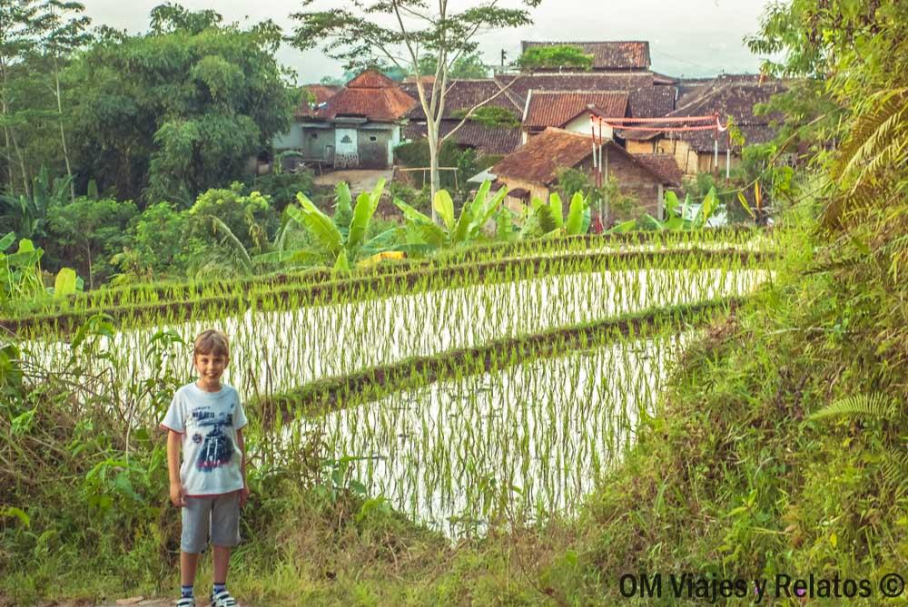 ruta-arrozales-Java