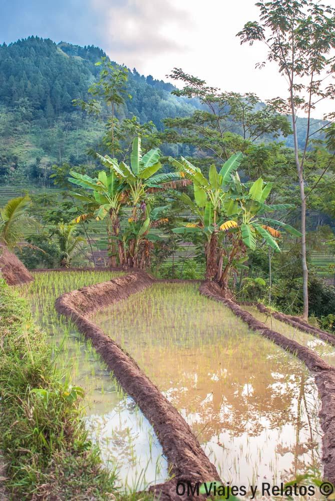 rutas-arrozales-isla-de-Java-senderismo