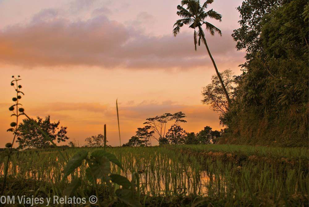 Java-Atardecer-entre-campos-de-arroz