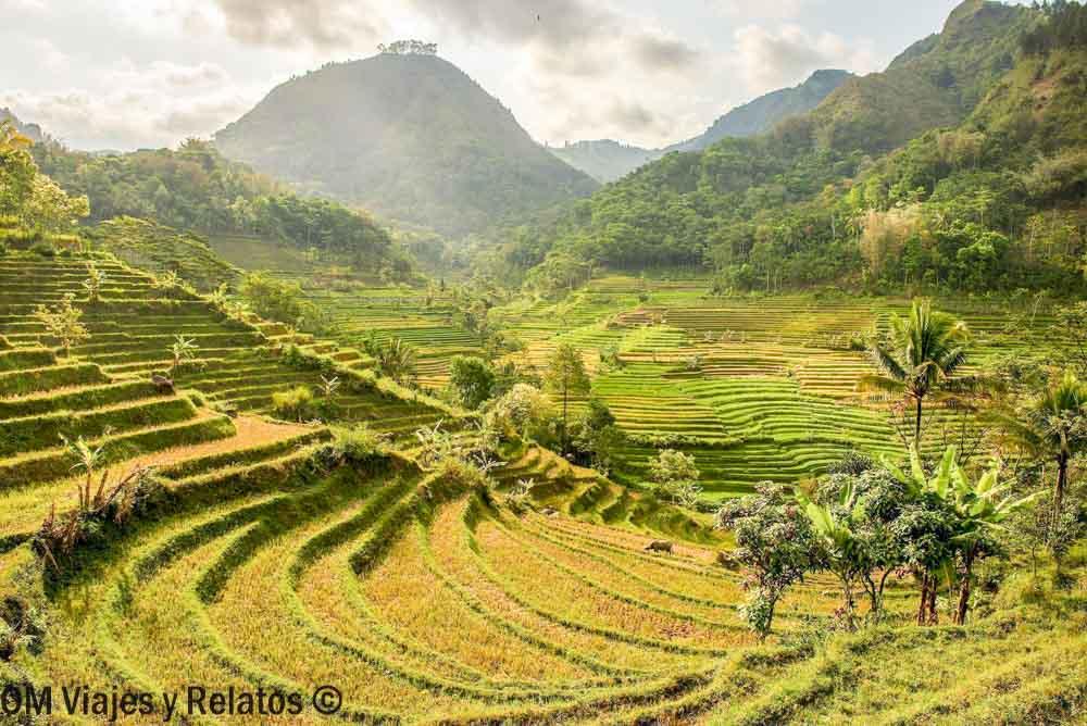 senderismo-arrozales-de-Java