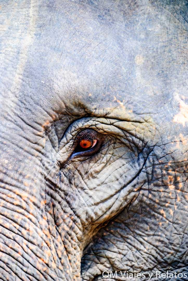 Chiang-Mai-ver-elefantes