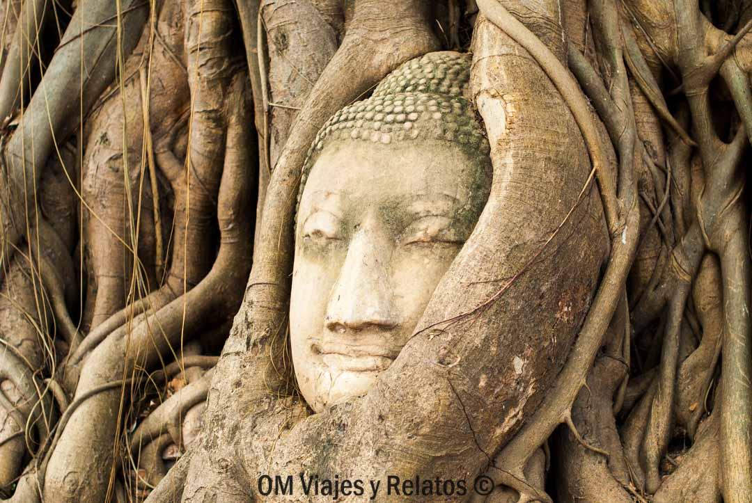 Buda-y-árbol-sagrado-Ayutthaya