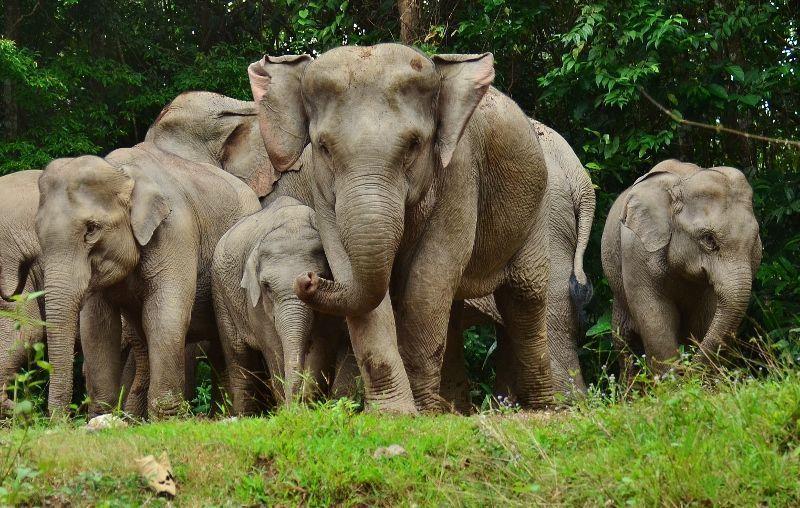 elefantes-Khao-Yai