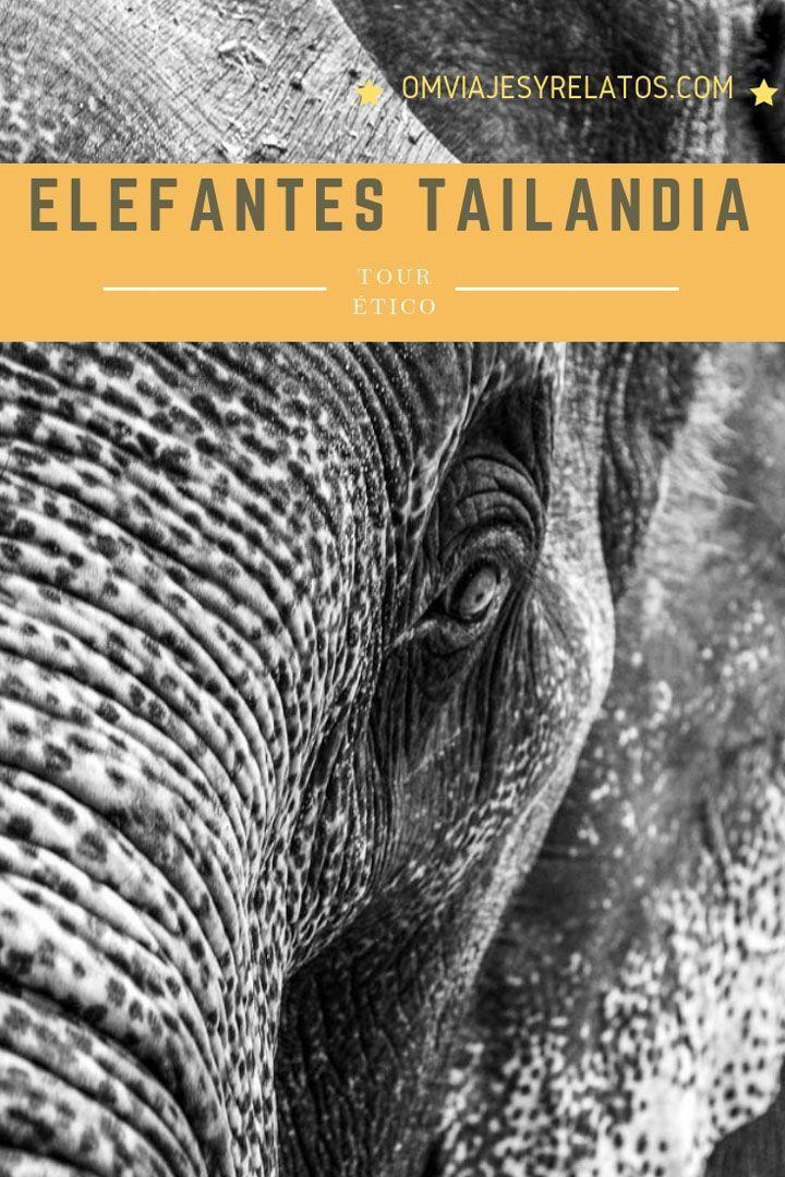tour-elefantes-Tailandia