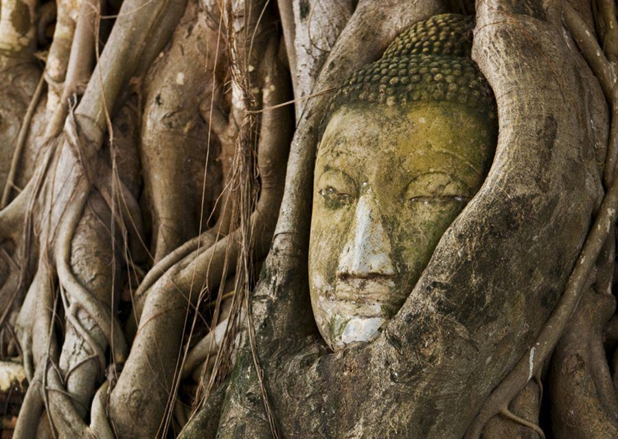 cabeza de Buda en el árbol Tailandia